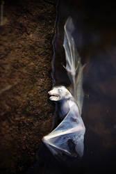 Chiroptera Diabolica by AimishBoy