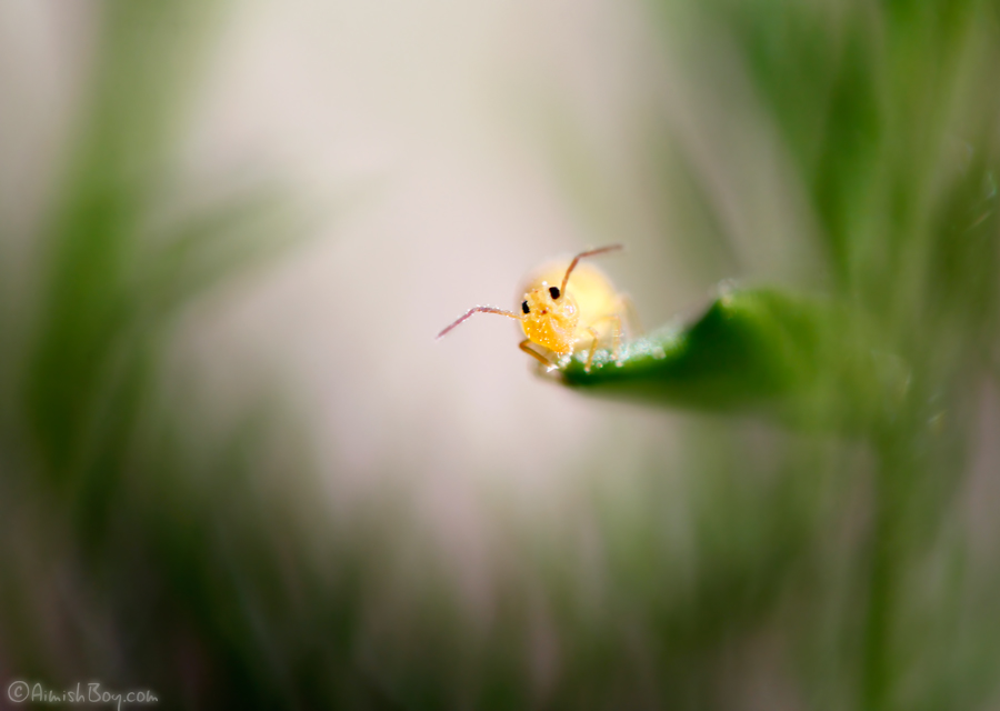 Pikachu! by AimishBoy