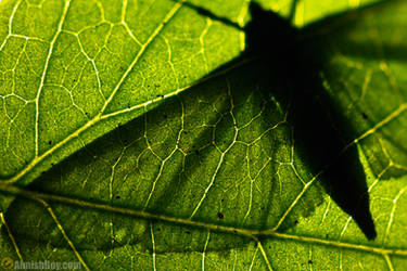 Veins by AimishBoy