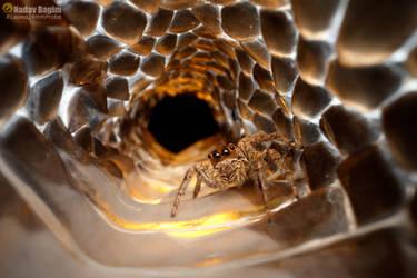 Inside the snake skin