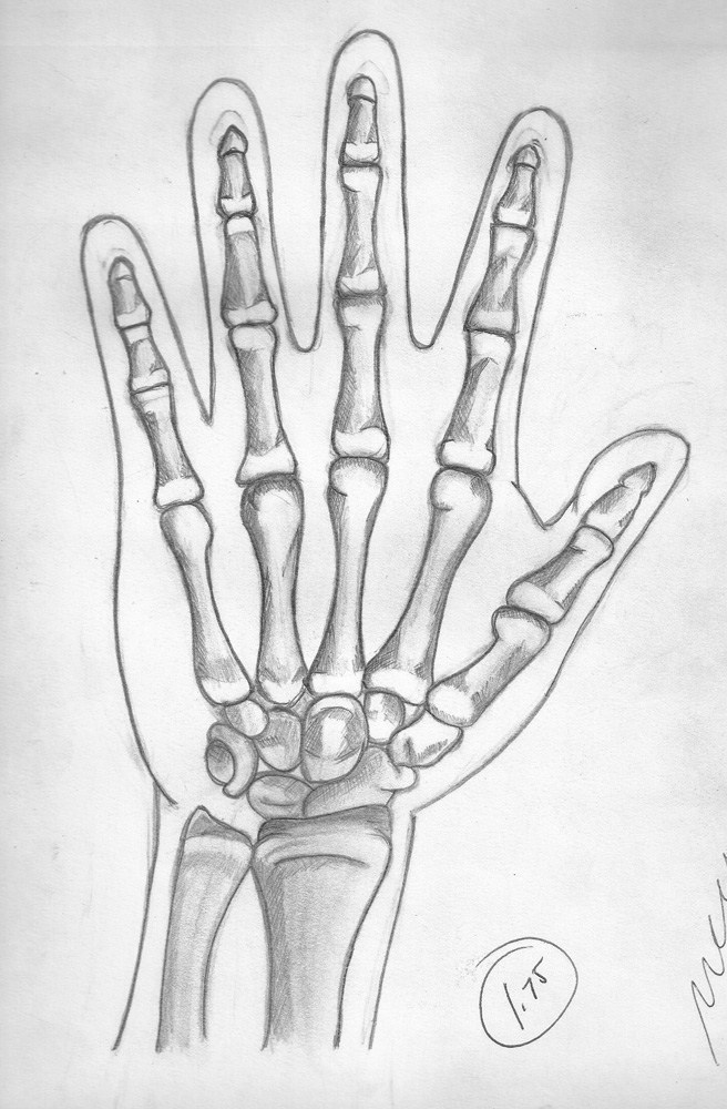 Anatomy Skeleton Hand by lemrac on DeviantArt