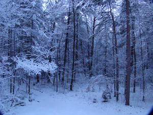 Snow Forest by Trail-er