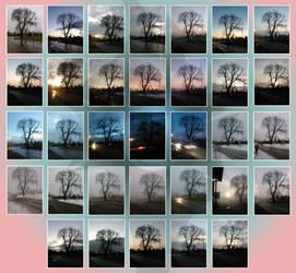 The Seasons Tree