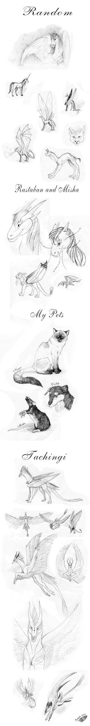 Lectures Doodles