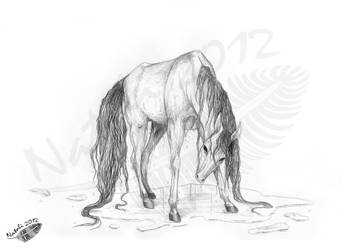 Umbra the Kelpie by Natoli