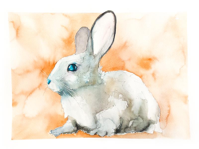 Bunny#13 by PanRafik