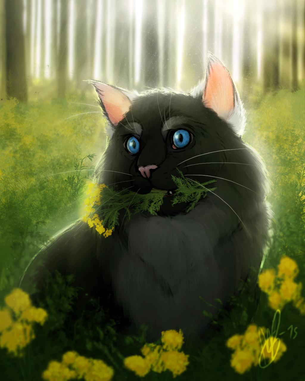 Warrior Cats Dawn Of The Clans Fanart: Cloud Spots: Pioneer Of Cat Medicine By HulluMel On DeviantArt