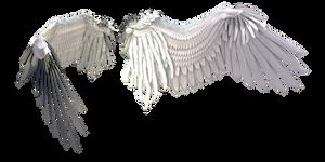 White Wings 3