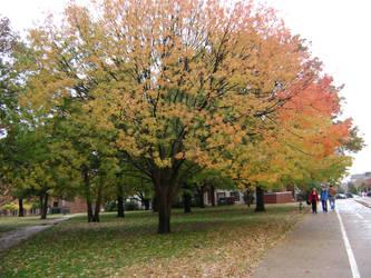 OSU Rainy Autumn by LadyGwenhwyfar