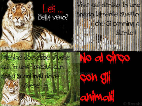 My work for ''Animal rights graphic contest''
