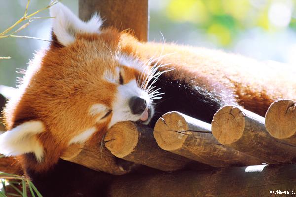 Lemme sleep by N-amelessLiberty