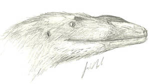 Juvenile megaraptoran head sketch by Jeda45