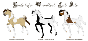 Linderhofer Foal Sale - FIRST COME FIRST SERVE