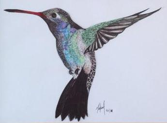 +Hummingbird+ by enteryournameinhere