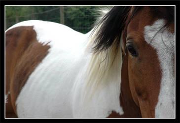 Horse Wisper by InADream