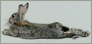 Lounging bunny