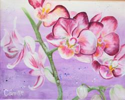 Orchids revised v. 3.0