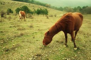 horses by liquidsunnyday
