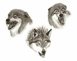 Snarling wolves by SundsArt