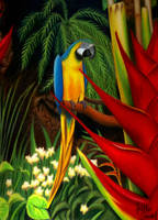 Blue and Gold Macaw by ratgirl84