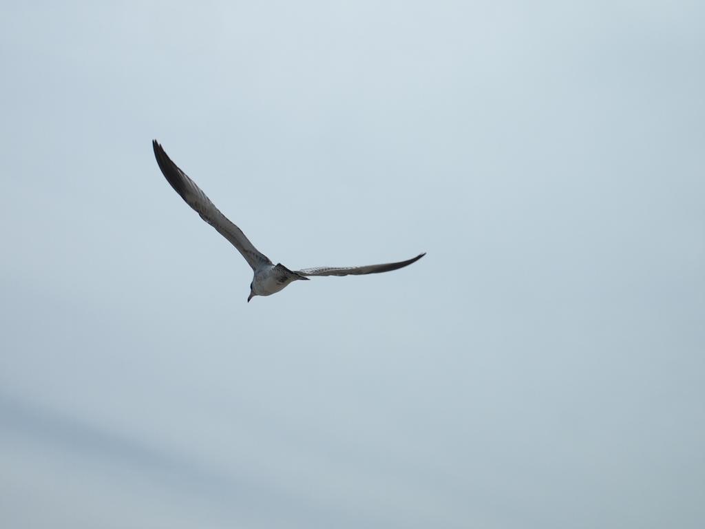 Bird in flight by ShadowTheShinigami