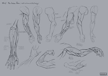 #002 -- the Human Arm by gregor-kari