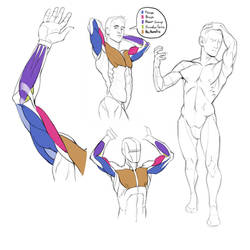 #012 - Muscles of the arm by gregor-kari