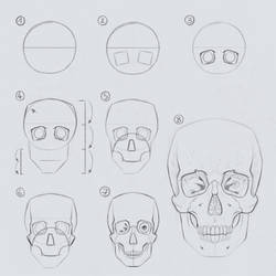 Drawing the Skull in 7 to 8 steps