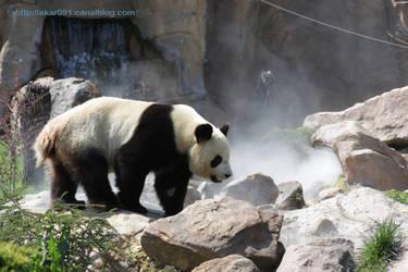 Panda by akar091
