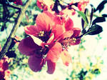 spring parfume by 3divine
