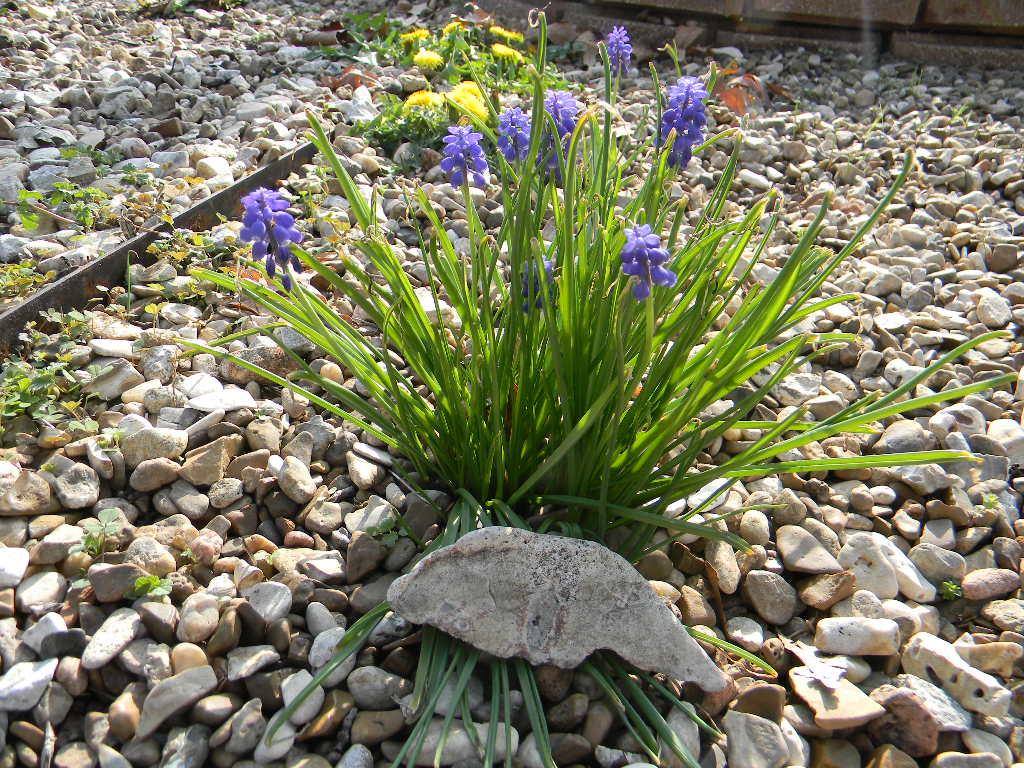 Rockin Flowers by Perceptor