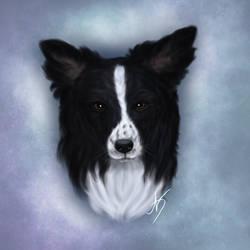 Australian Shepherd - Portrait by nocturna-dolok