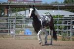 DWP FREE HORSE STOCK 42