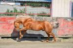 DWP FREE HORSE STOCK 55