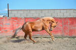 DWP FREE HORSE STOCK 56