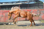 DWP FREE HORSE STOCK 57