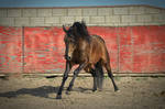 DWP FREE HORSE STOCK 60