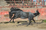 DWP FREE HORSE STOCK 62