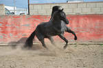 DWP FREE HORSE STOCK 63