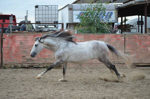 DWP FREE HORSE STOCK 168 by DancesWithPonies