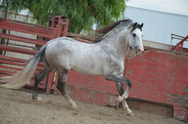DWP FREE HORSE STOCK 173 by DancesWithPonies