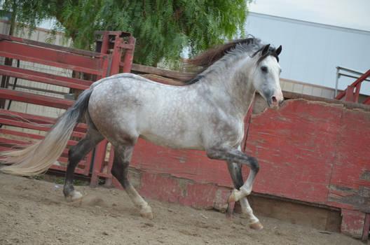 DWP FREE HORSE STOCK 173