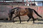 DWP FREE HORSE STOCK 204