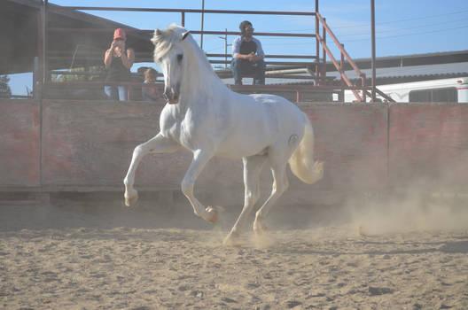 DWP FREE HORSE STOCK 242