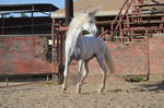 DWP FREE HORSE STOCK 245
