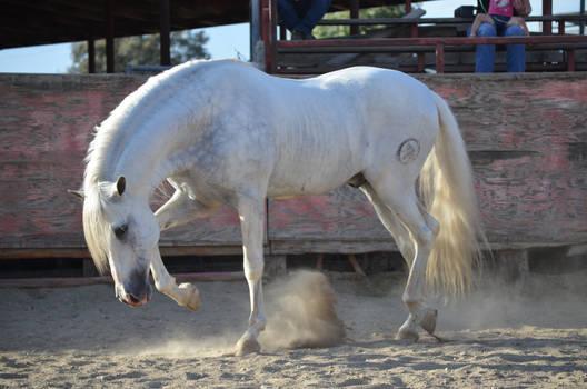 DWP FREE HORSE STOCK 246