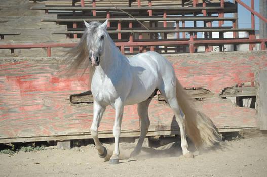 DWP FREE HORSE STOCK 254