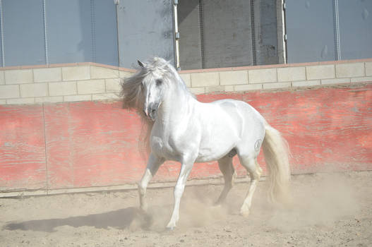 DWP FREE HORSE STOCK 256