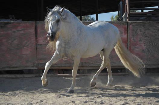 DWP FREE HORSE STOCK 257