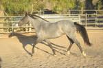 DWP FREE HORSE STOCK 315
